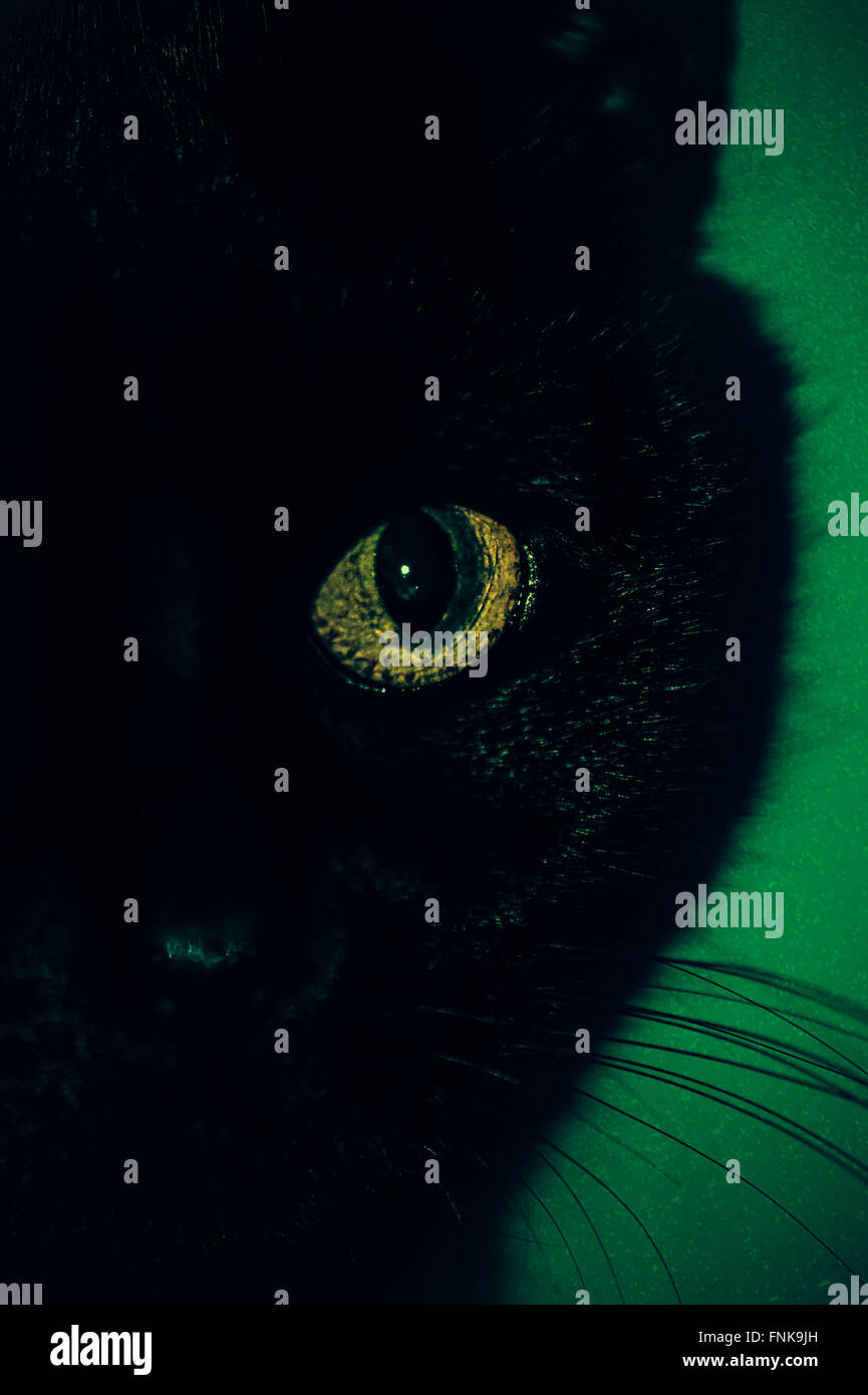 Black cat eye close up Photo Stock