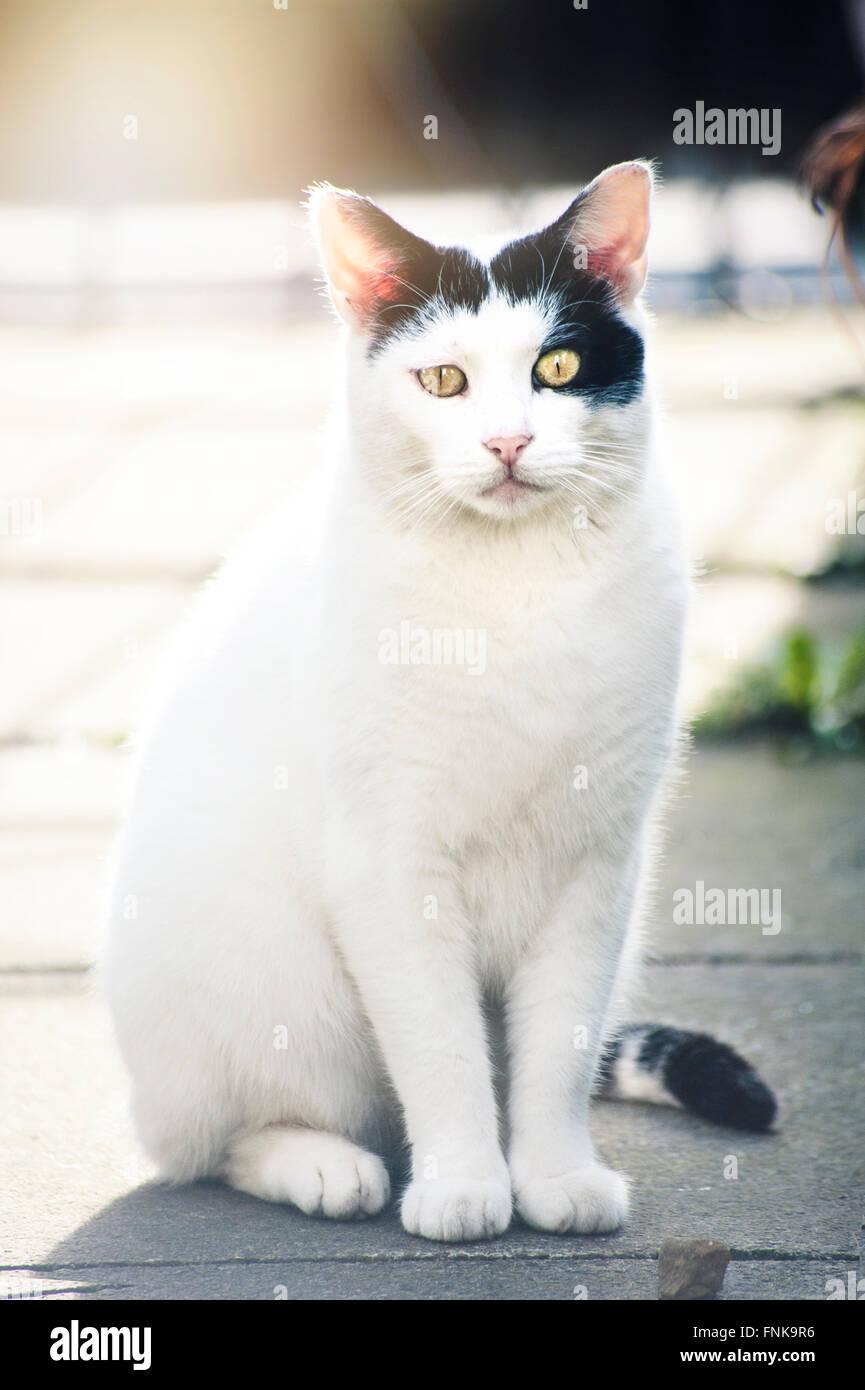 Chat blanc, assis sur la chaussée Photo Stock