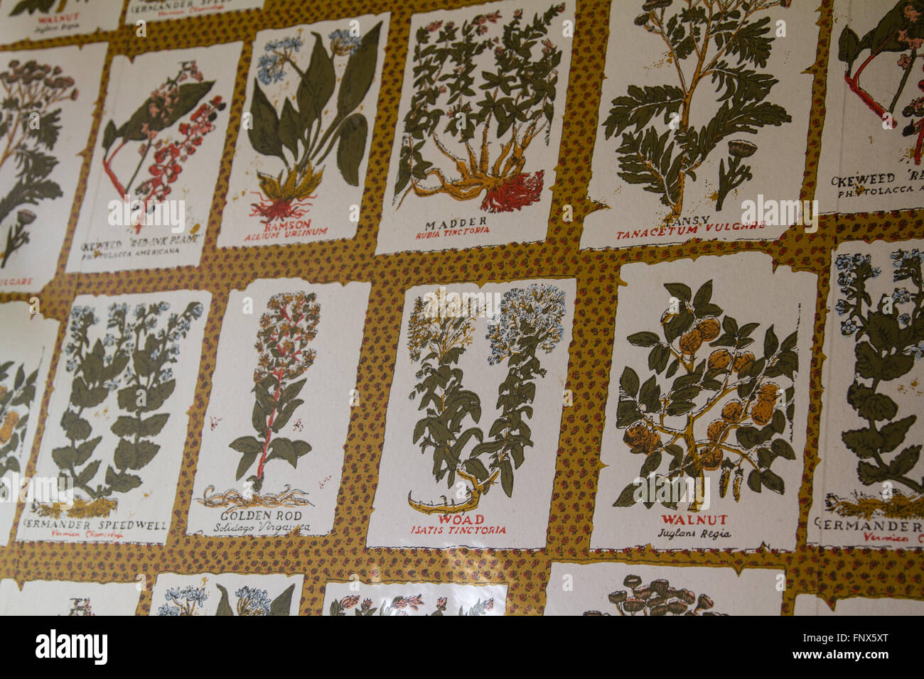 Papier Peint A Theme Fleur Vintage Banque D Images Photo Stock
