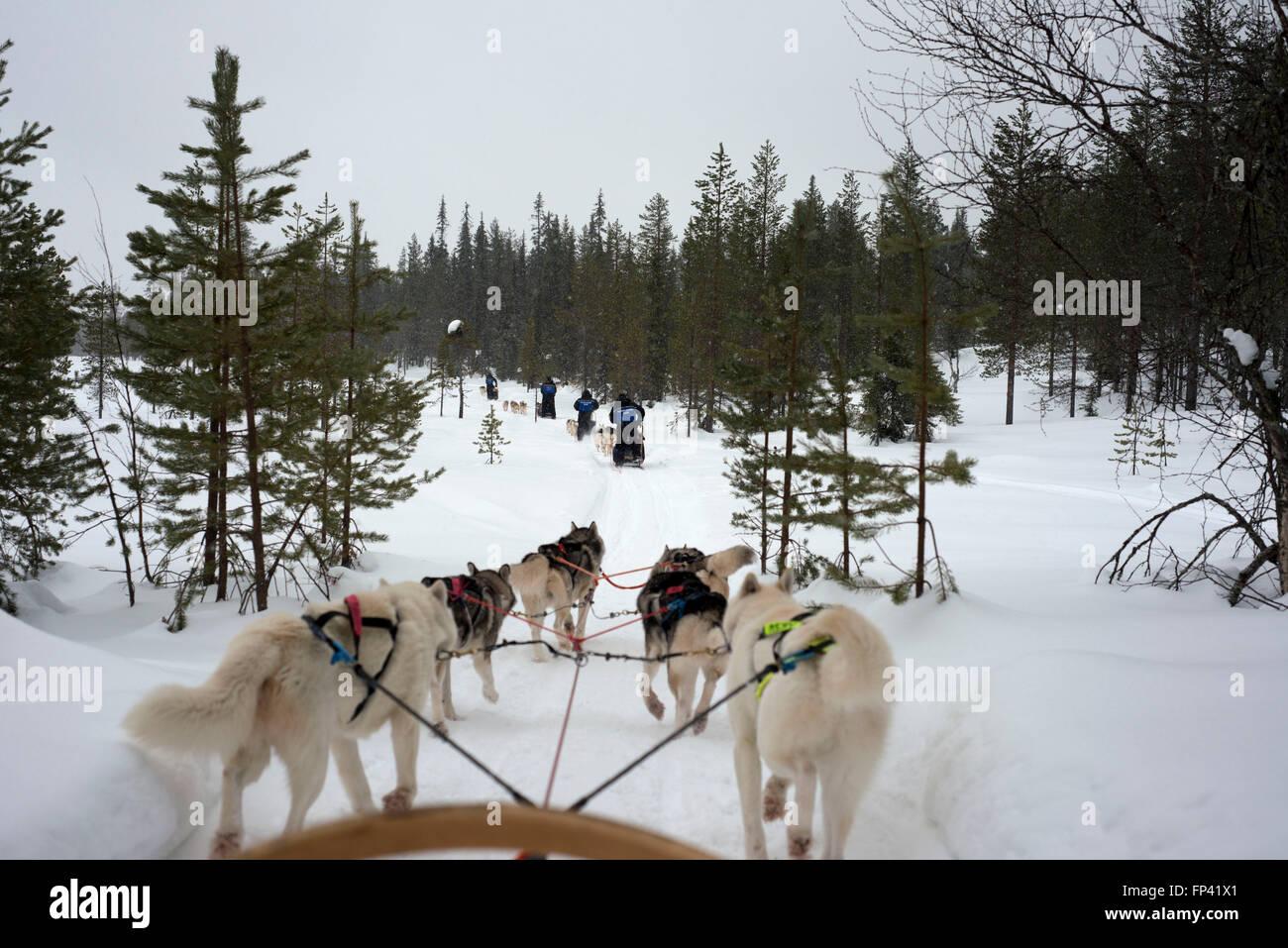 Salla husky safari. Laponie, Finlande. Avant le safari notre guide vous offre un cours de conduite et vous dire comment gérer la Banque D'Images