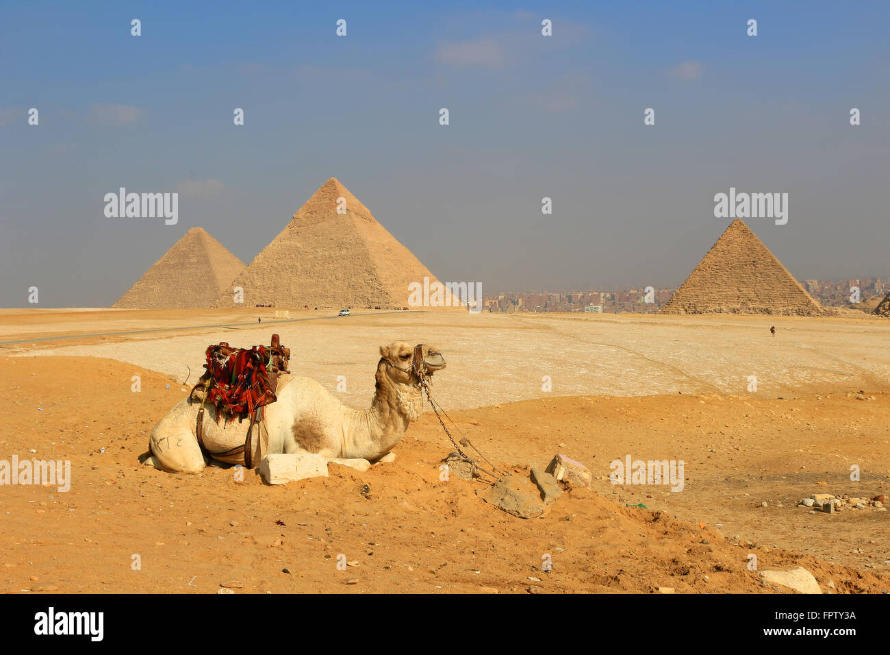 Détente à chameau les pyramides de Gizeh, des structures de l'ancienne Egypte dans le sable doré Photo Stock