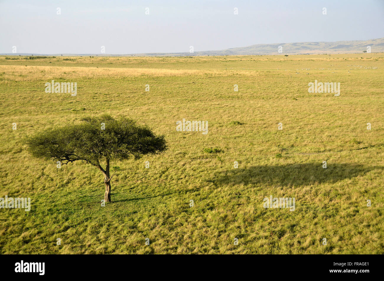 Paysage de savane à l'aube comme vu à partir de la montgolfière dans tourist Photo Stock