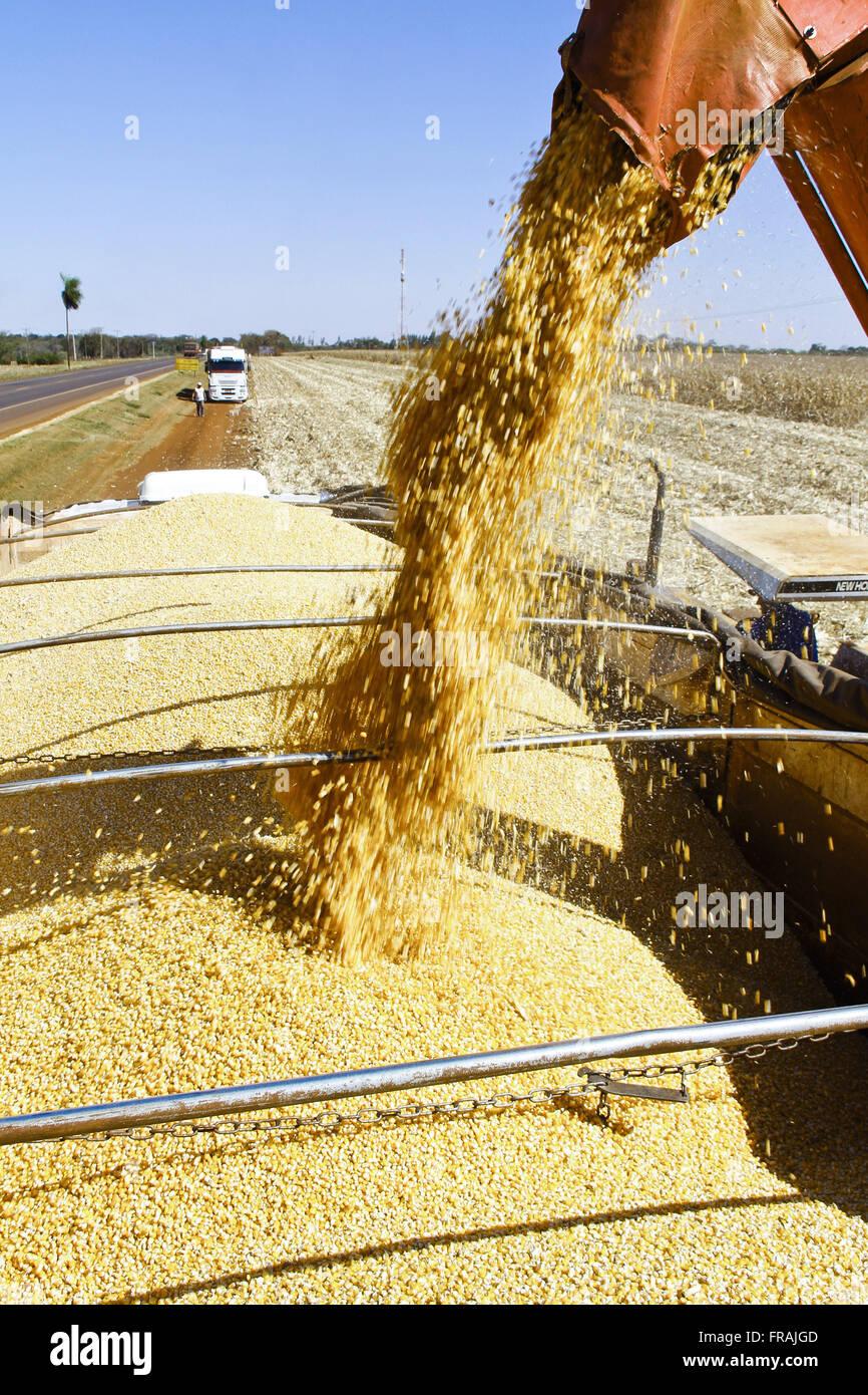 L'Ensileuse à maïs télécharger truck Photo Stock