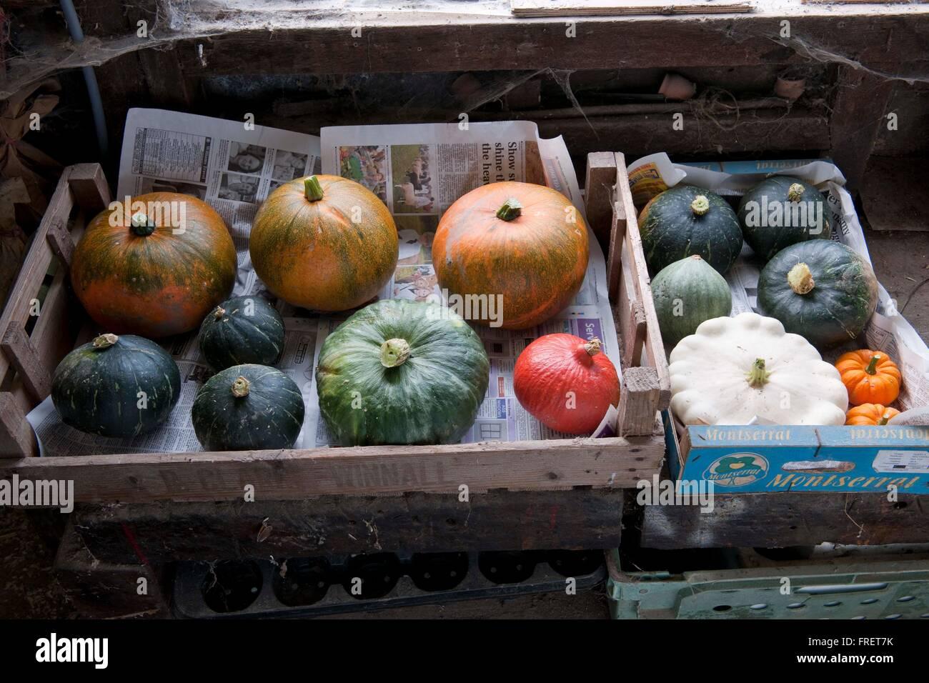 Une sélection de plats fraîchement récoltées et stockées sur les courges cultivés Photo Stock