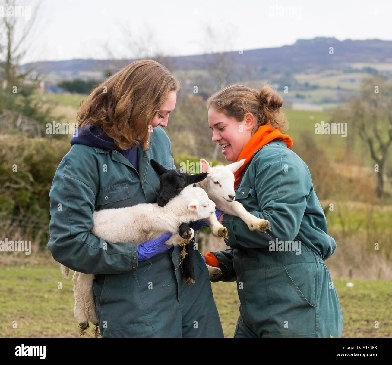 Les étudiants vétérinaires et Frowke Anne-Myrthe de Kwant Hesselink de l'Université d'Utrecht Photo Stock