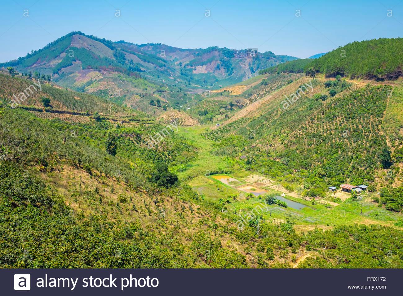 Les plantations de café dans la région centrale des Highlands, Lam Ha, District de la Province de Lam Photo Stock