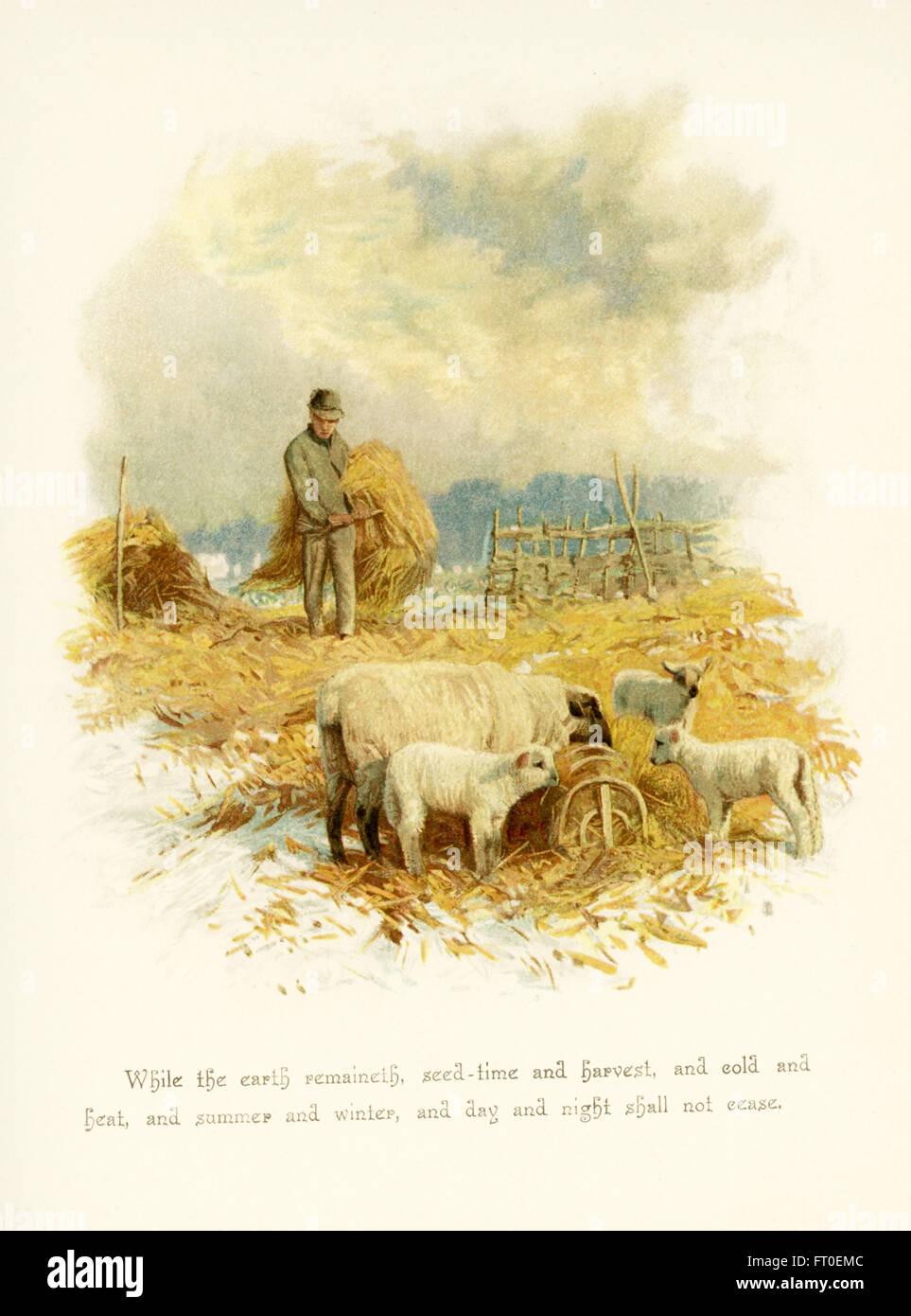 La légende de cette illustration se lit comme suit: Tant que la terre subsistera, les semences et la moisson, le froid et la chaleur, l'été et l'hiver, le jour et la nuit ne cesseront point. La scène représente un agriculteur avec ses bottes de foin et des moutons nourris du foin. Il a accompagné les poèmes de Phillips Brooks. Brooks était ministre épiscopalien à Boston à la fin des années 1800. Banque D'Images