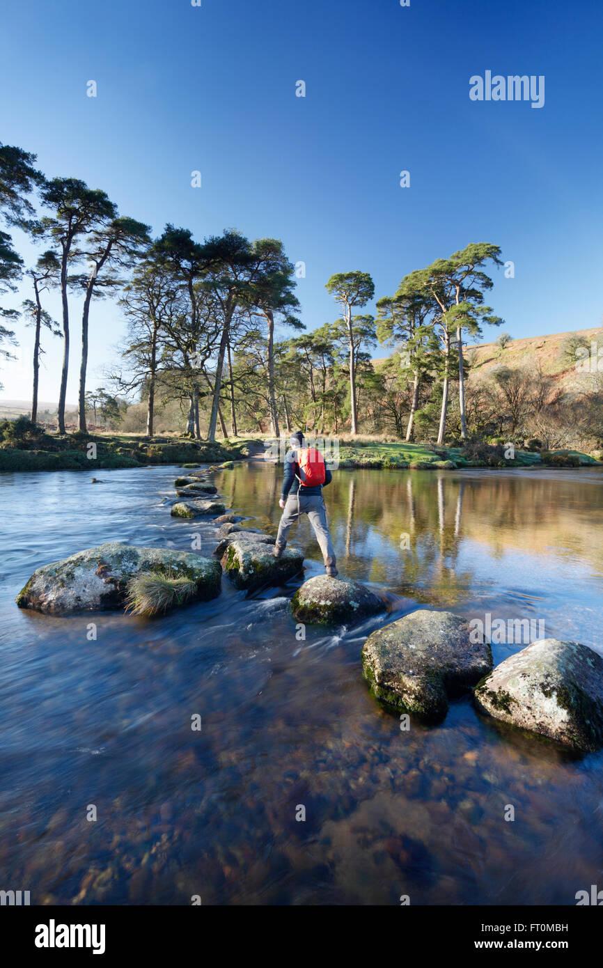 Walker crossing stepping stones sur la rive ouest de la rivière Dart. Parc National de Dartmoor. Devon. UK. Photo Stock