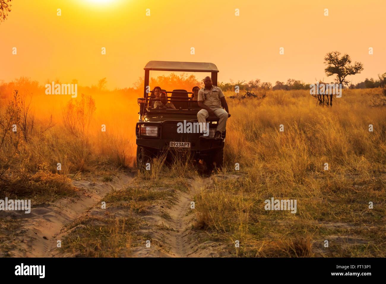 Jeep safari avec guide de la faune-spotter sur un jeu dur au coucher du soleil, Sandibe Camp, par le Moremi, Okavango Photo Stock