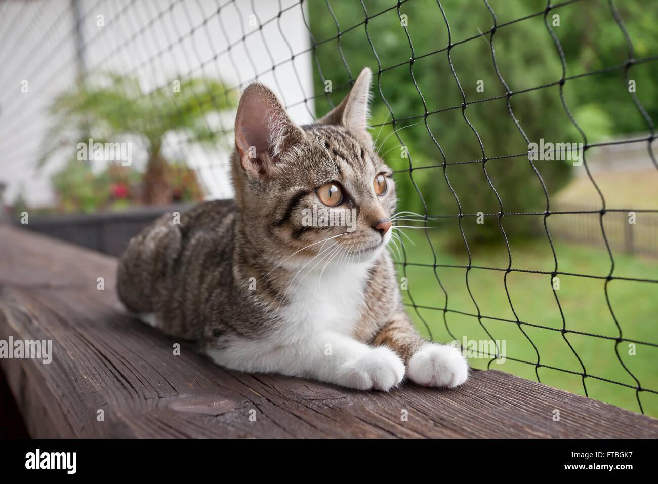 Chat domestique est couché sur un balcon en face d'un filet Photo Stock