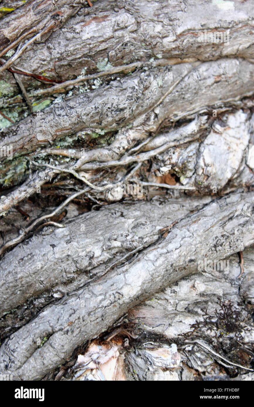 Image abstraite d'un tronc d'arbre noueux Photo Stock