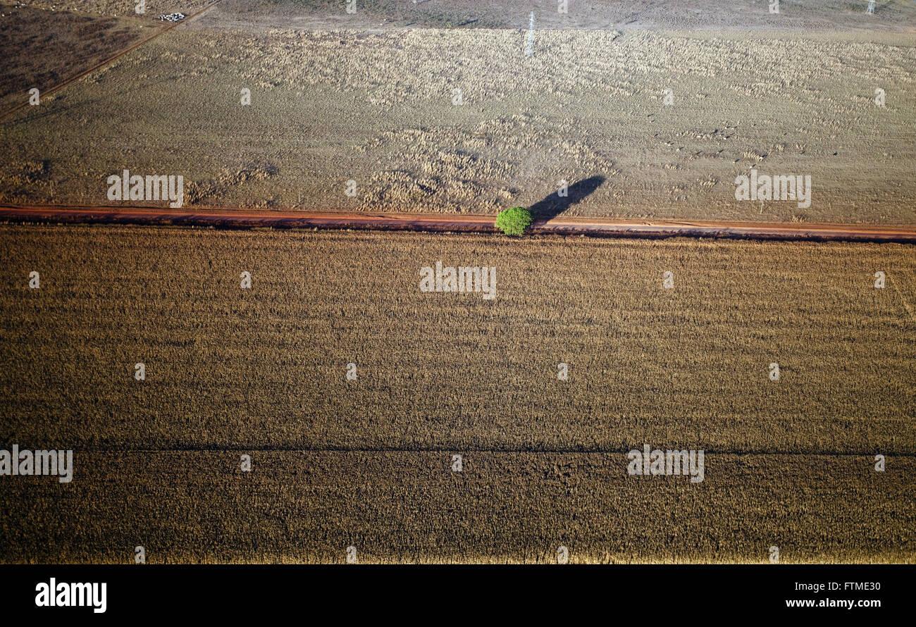 Vue aérienne de route de terre dans la zone des savanes défrichées pour l'agriculture Photo Stock