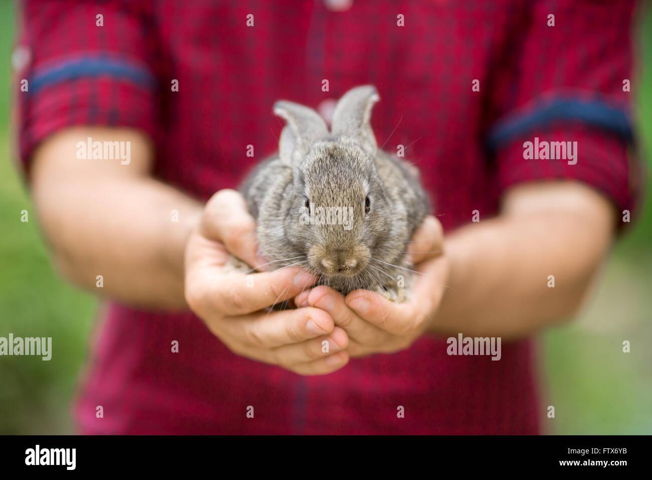 Lapin. Les animaux et les personnes Photo Stock