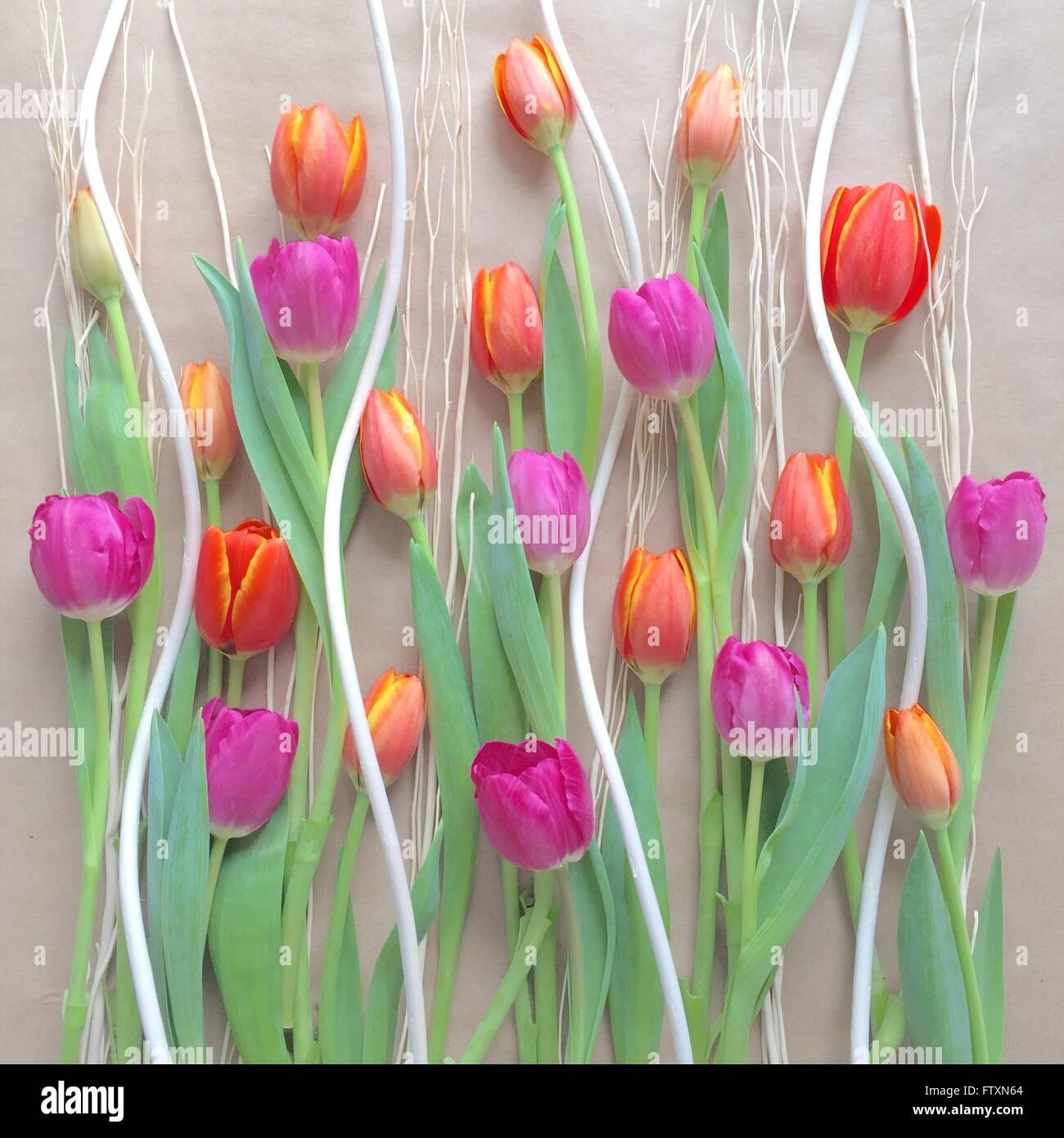 Décoration de tulipes colorées Photo Stock