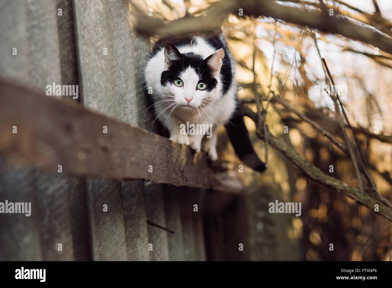Portrait de curieux méfier cat looking at camera Photo Stock