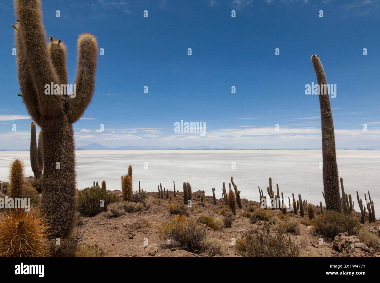L'Isla del Pescado, Salar de Uyuni, Bolivie Photo Stock