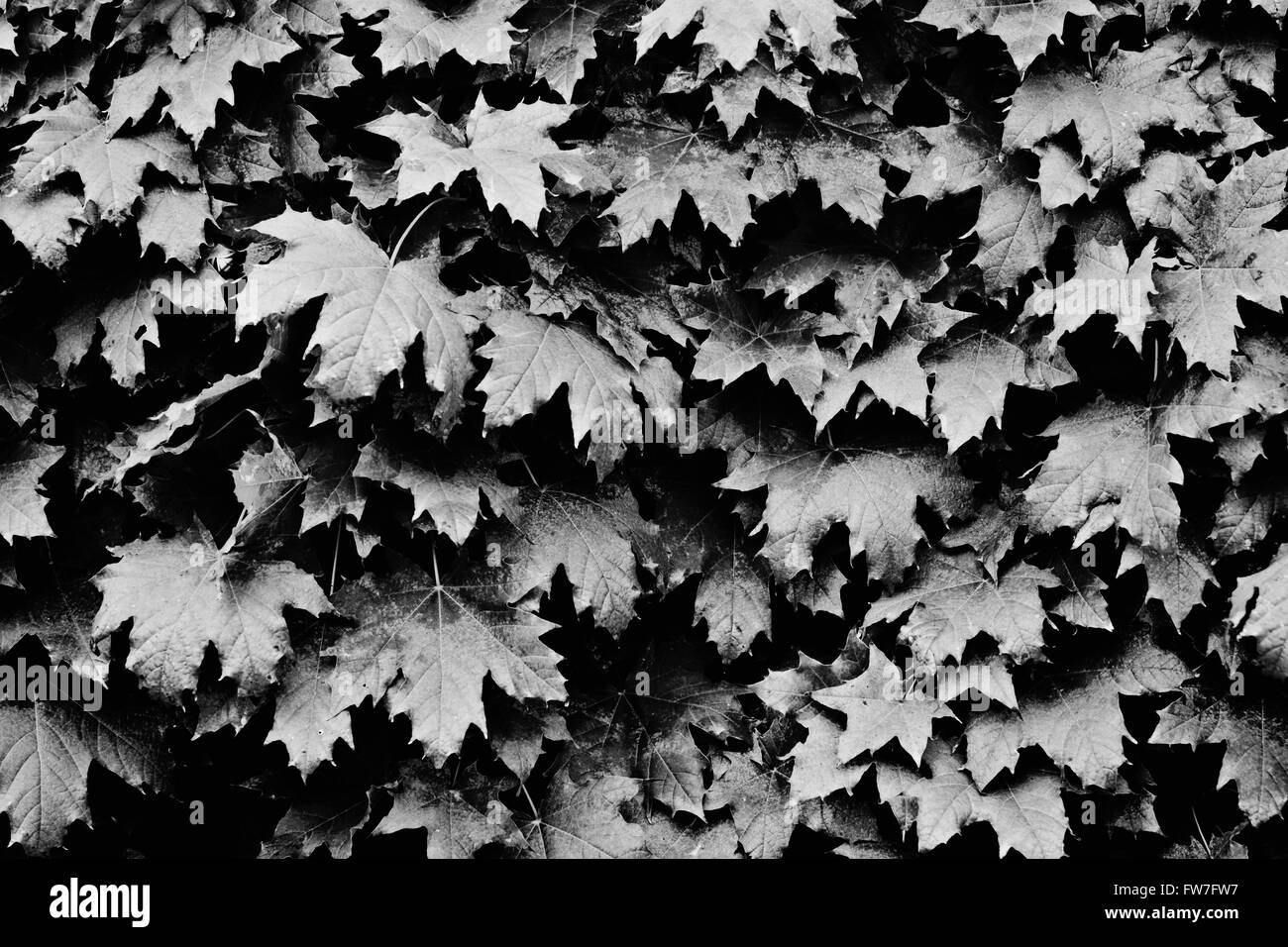 B/w fond feuilles Photo Stock