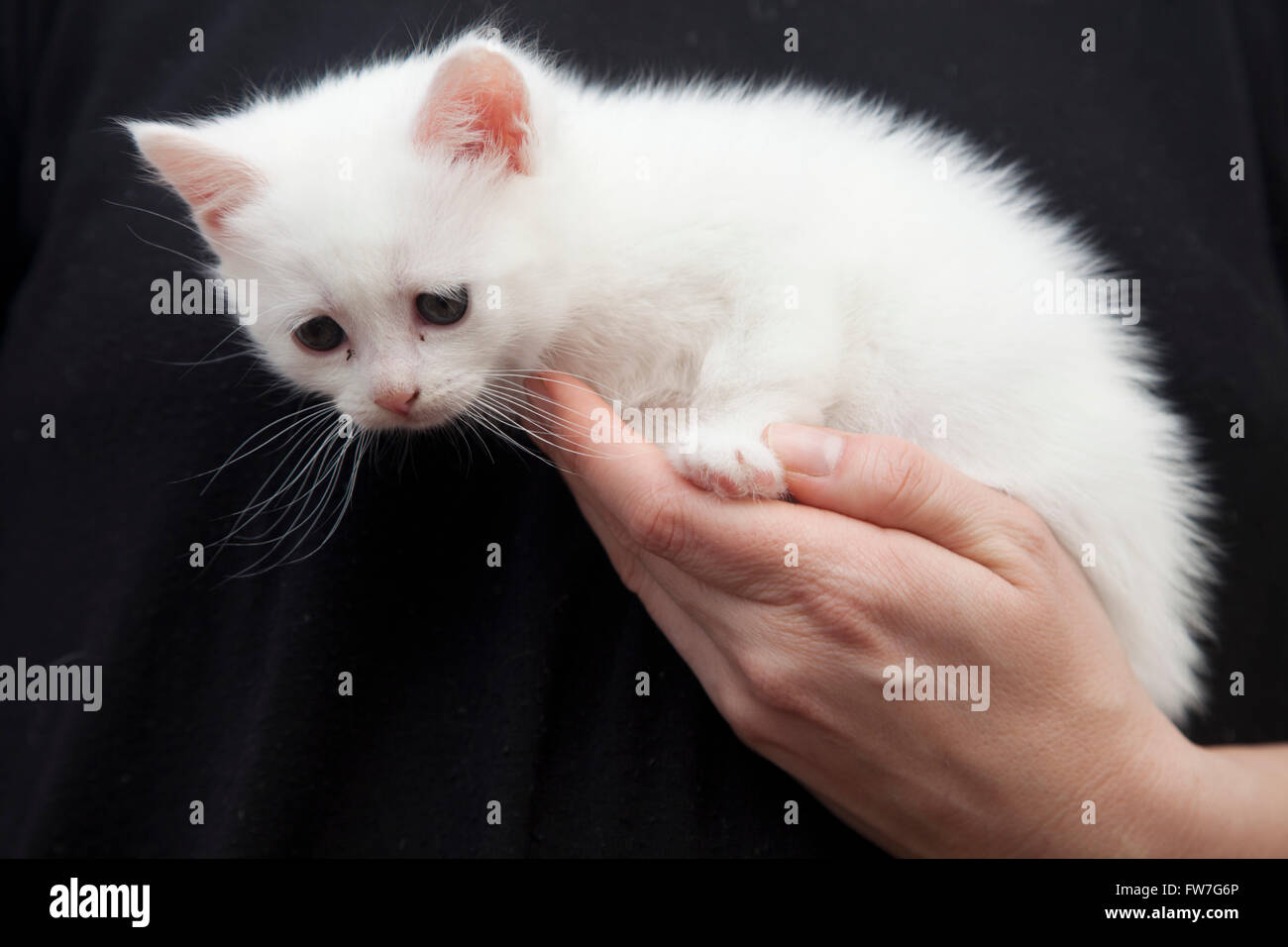 Chat, animal, domestique, tendre, doux, relaxant Photo Stock