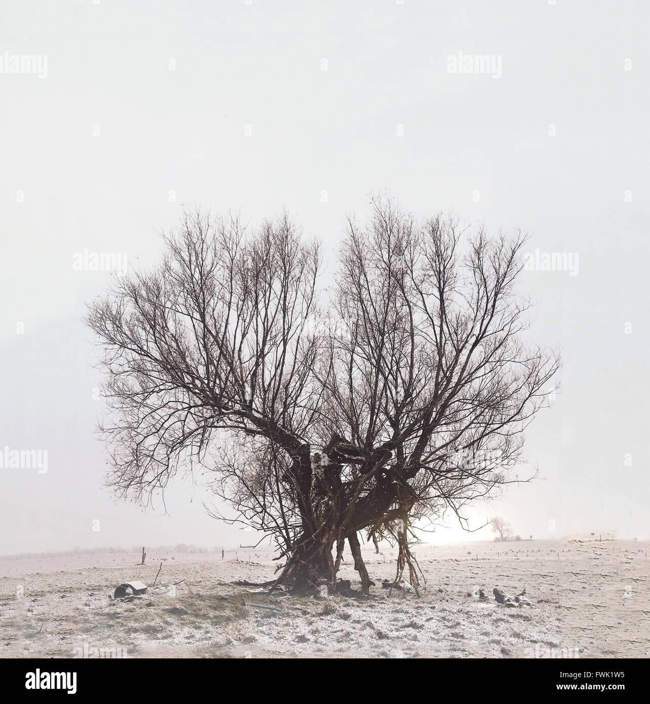 Arbre nu sur terrain contre Ciel clair Photo Stock