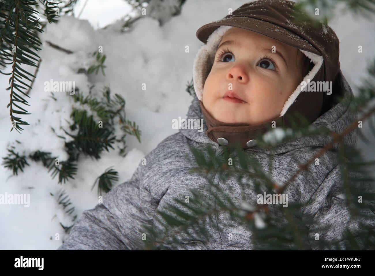 Tout-petits curieux par permanent Pin couvert de neige Photo Stock