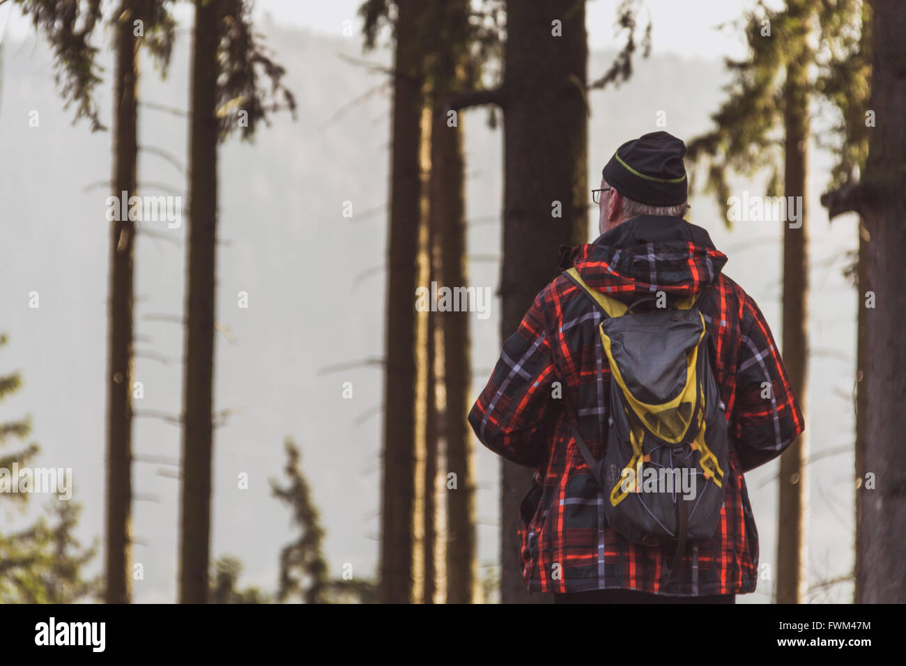 Vue arrière de l'Homme debout contre des arbres Photo Stock
