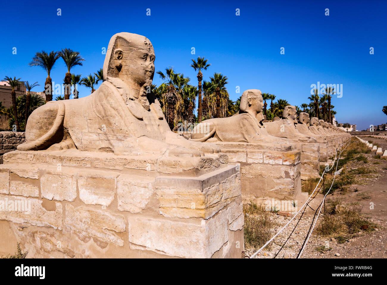 L'Avenue de sphinx de l'Egypte en Luxor Luxor Temple Banque D'Images