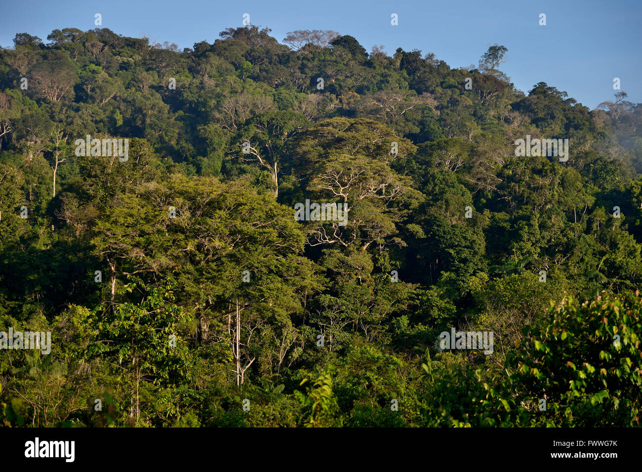 Forêt amazonienne, district de Itaituba, Pará, Brésil Photo Stock