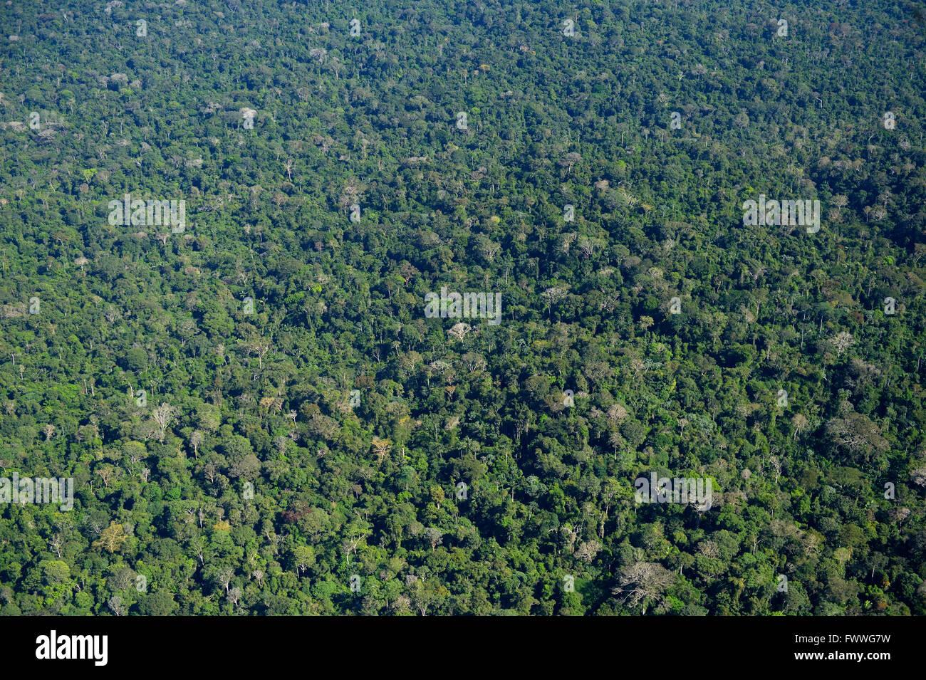 Forêt amazonienne entre Itaituba et Trairão, vue aérienne, Pará, Brésil Photo Stock