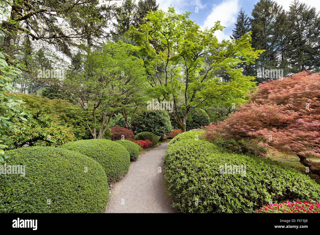 Jardin japonais plantes top photo of france toulouse - Couvre sol jardin japonais ...