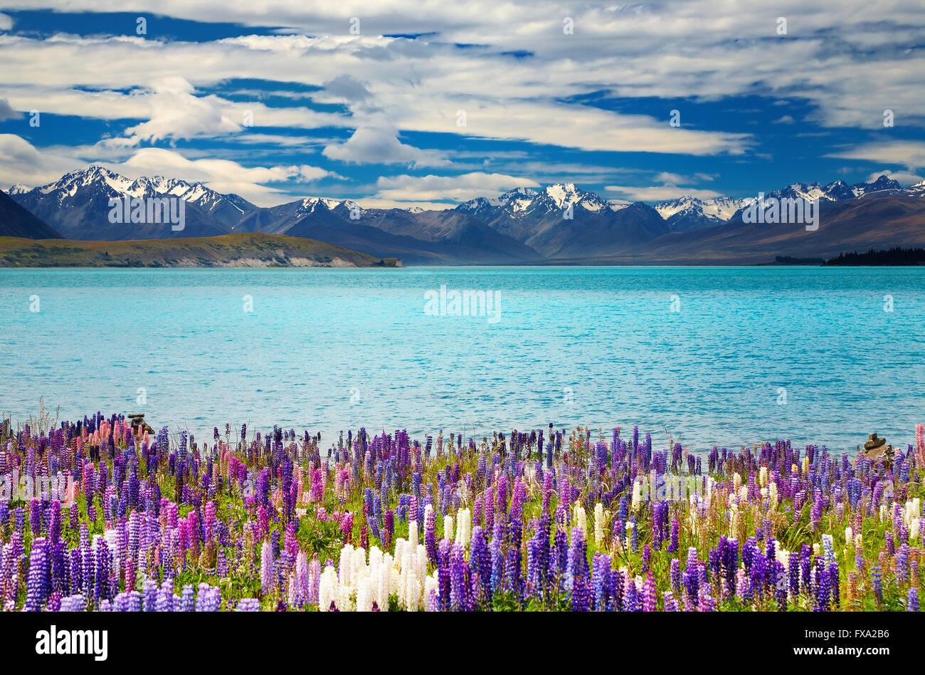 Le Lac Tekapo, île du Sud, Nouvelle-Zélande Photo Stock