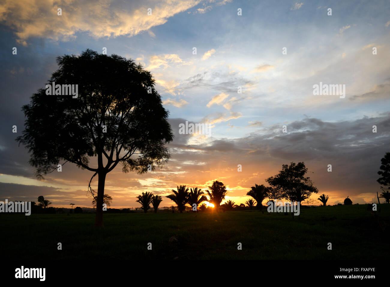Coucher de soleil sur un endroit dégagé ou des pâturages, forêt amazonienne entre Itaituba et Photo Stock