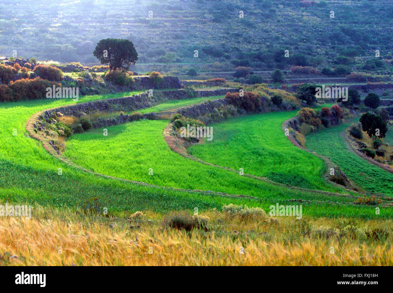 Ferme mitoyenne près de champs comme Soudah; région d'Asir, Royaume d'Arabie Saoudite Photo Stock