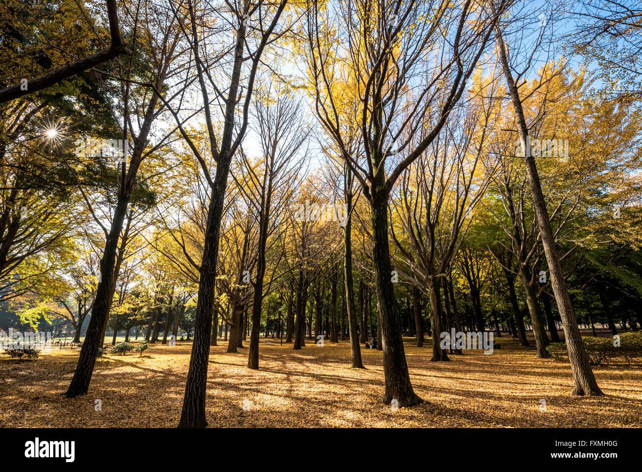L'automne dans le parc de Yoyogi, Tokyo, Japon Banque D'Images