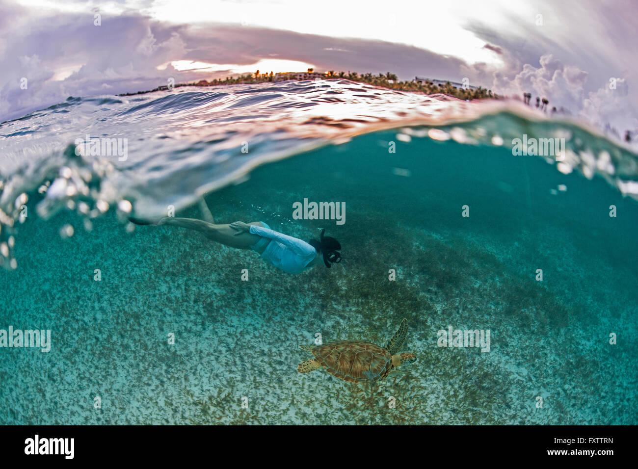 Snorkeler se rapproche de tortue de mer dans les eaux peu profondes de la Baie d'Akumal, Mexique, au coucher Photo Stock
