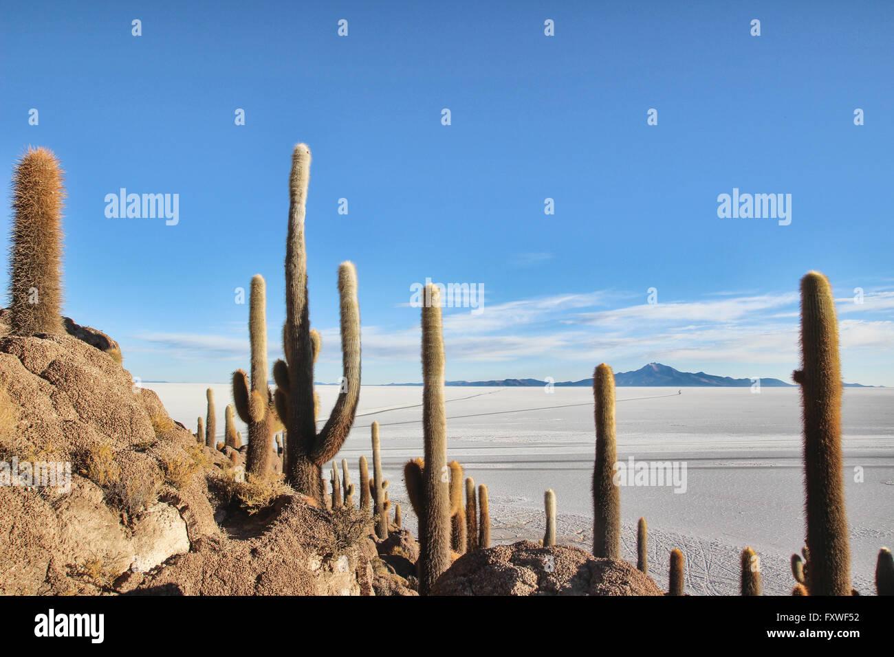 Bolivie - 22/08/2013 - Bolivie / Salar de Uyuni / Uyuni Uyuni, désert de sel - Isla del Pescado - Sandrine Photo Stock