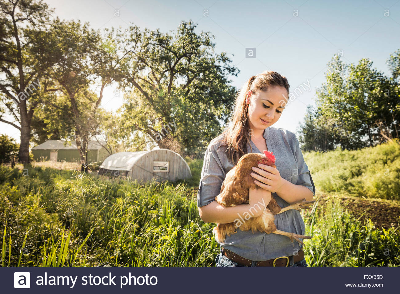 Femme tenant le poulet sur les terres agricoles smiling Photo Stock
