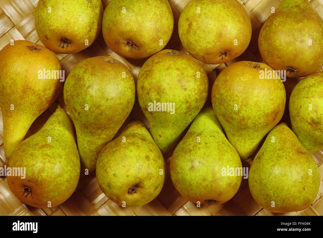 Robuste, poires mûres en automne Photo Stock