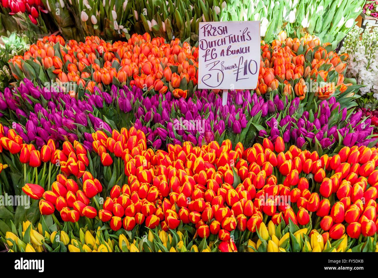 Tulipes pour vente, Columbia Road Flower Market, Tower Hamlets, London, England Photo Stock