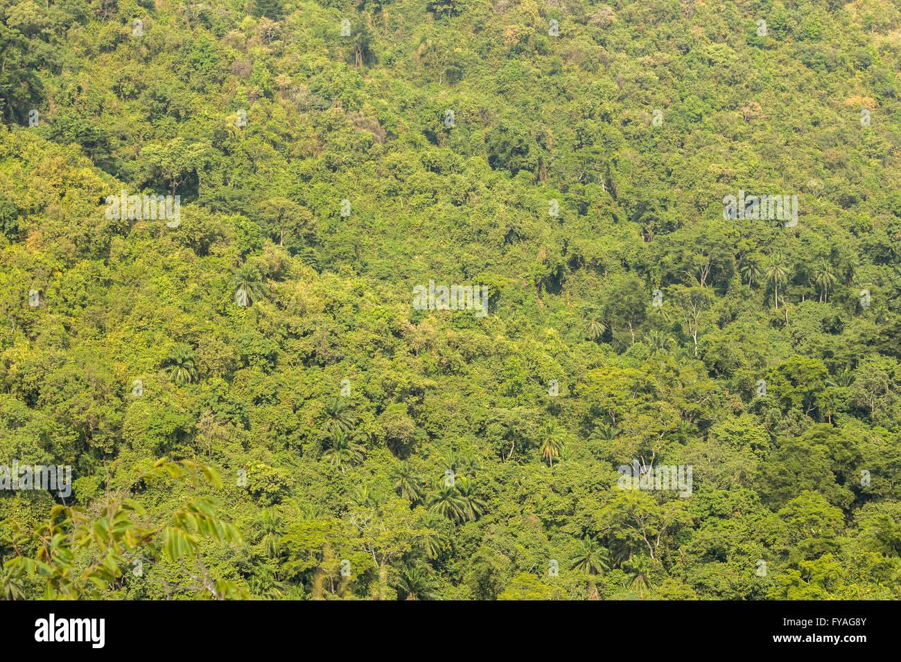 Vue sur la luxuriante forêt sauvage de Gombe Conservation Area, Tanzanie Photo Stock