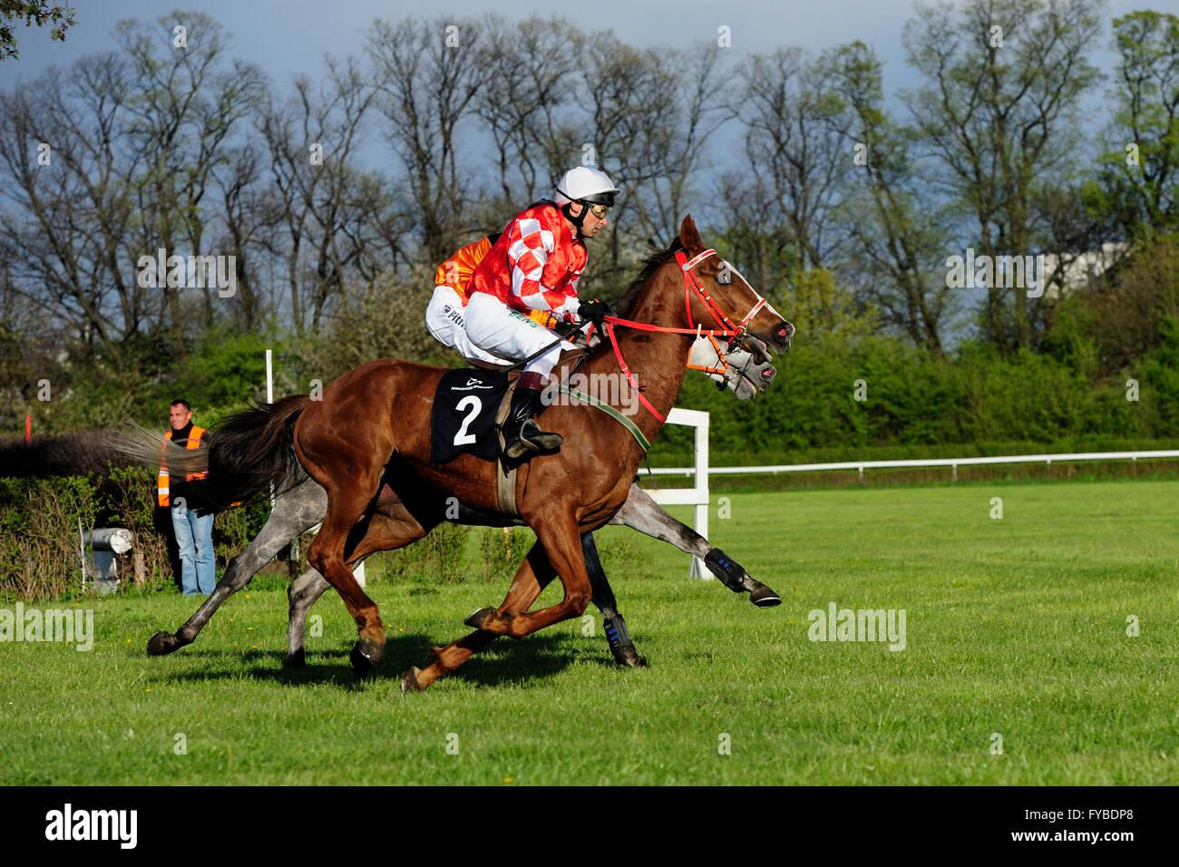 Gagner Salam, Salam à Rostislav Bens a donné que brièvement le chef de chevaux galopant dans un groupe Photo Stock