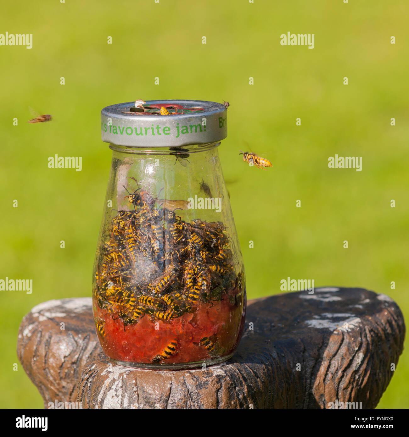 Wasp Trap Banque D Image Et Photos Alamy