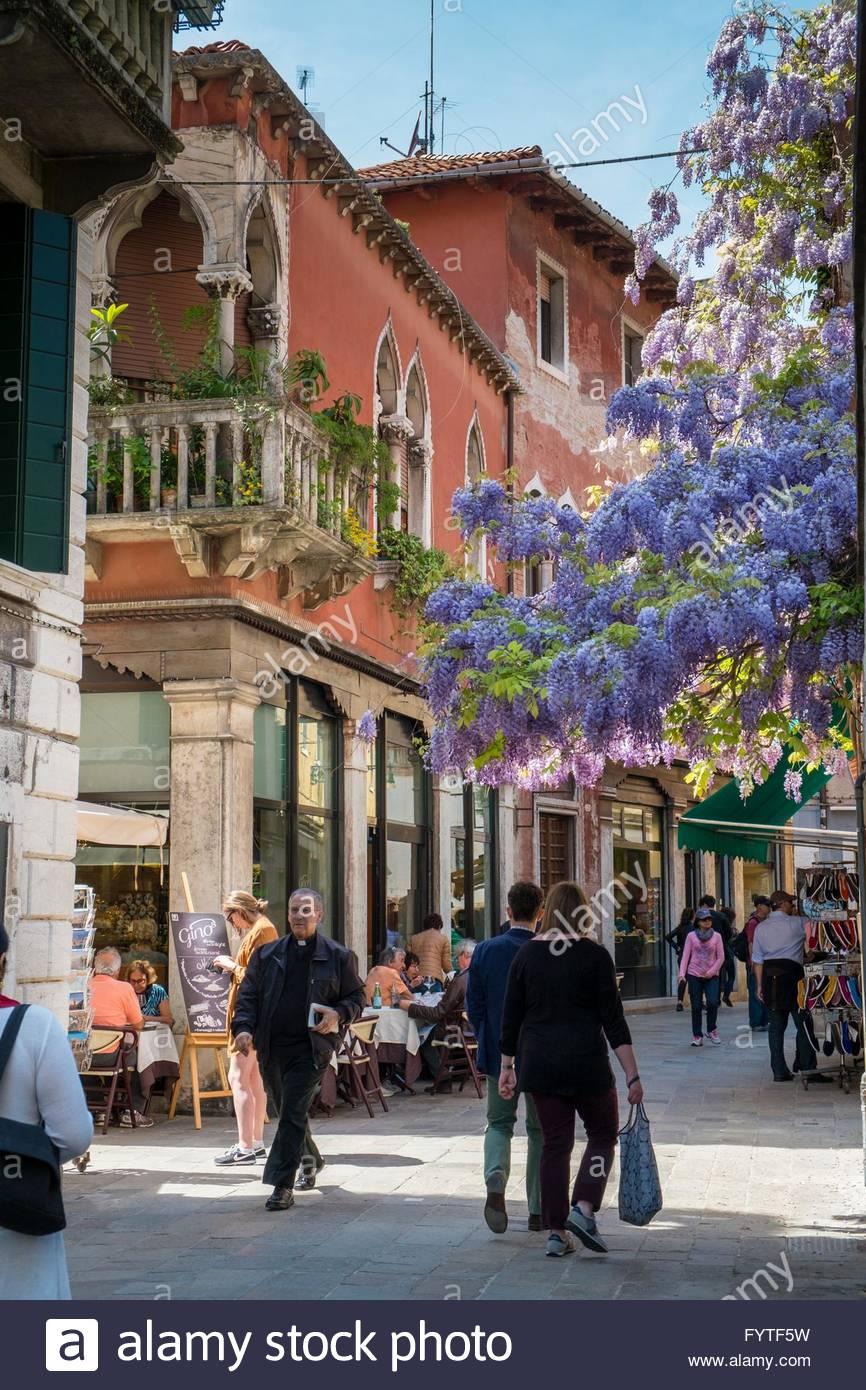 Wisteria surplombant une rue de Venise Photo Stock