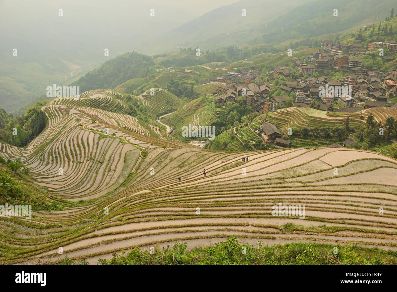 Les magnifiques rizières en terrasse de Ping'an dans la région autonome du Guangxi, Longji, Chine Photo Stock