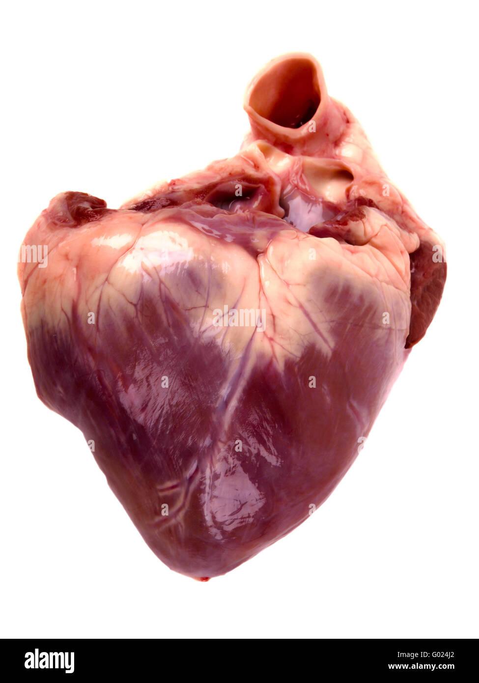 Coeur de porc. Close up on white background Photo Stock