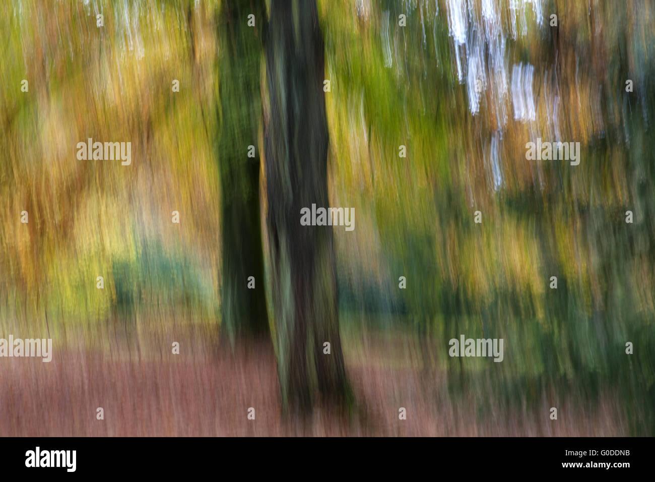 Forêt d'automne Impression Photo Stock