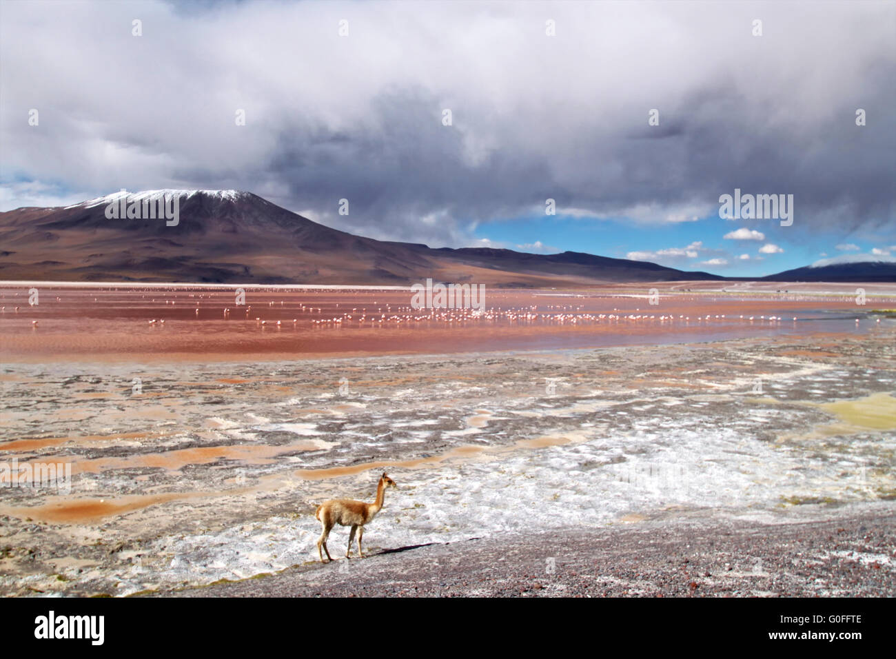 Laguna Colorada en Bolivie Photo Stock