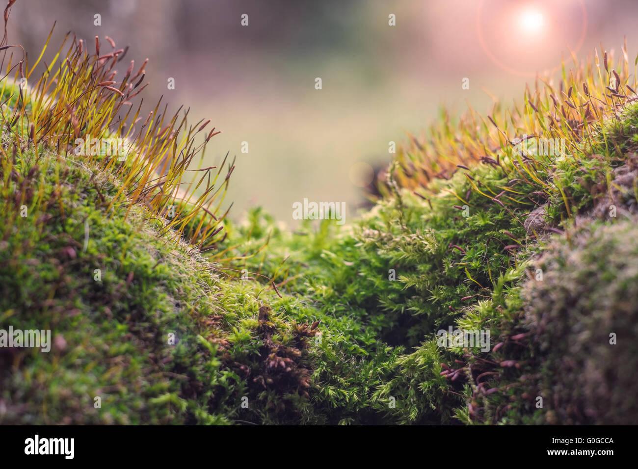 paysage de mousse Photo Stock