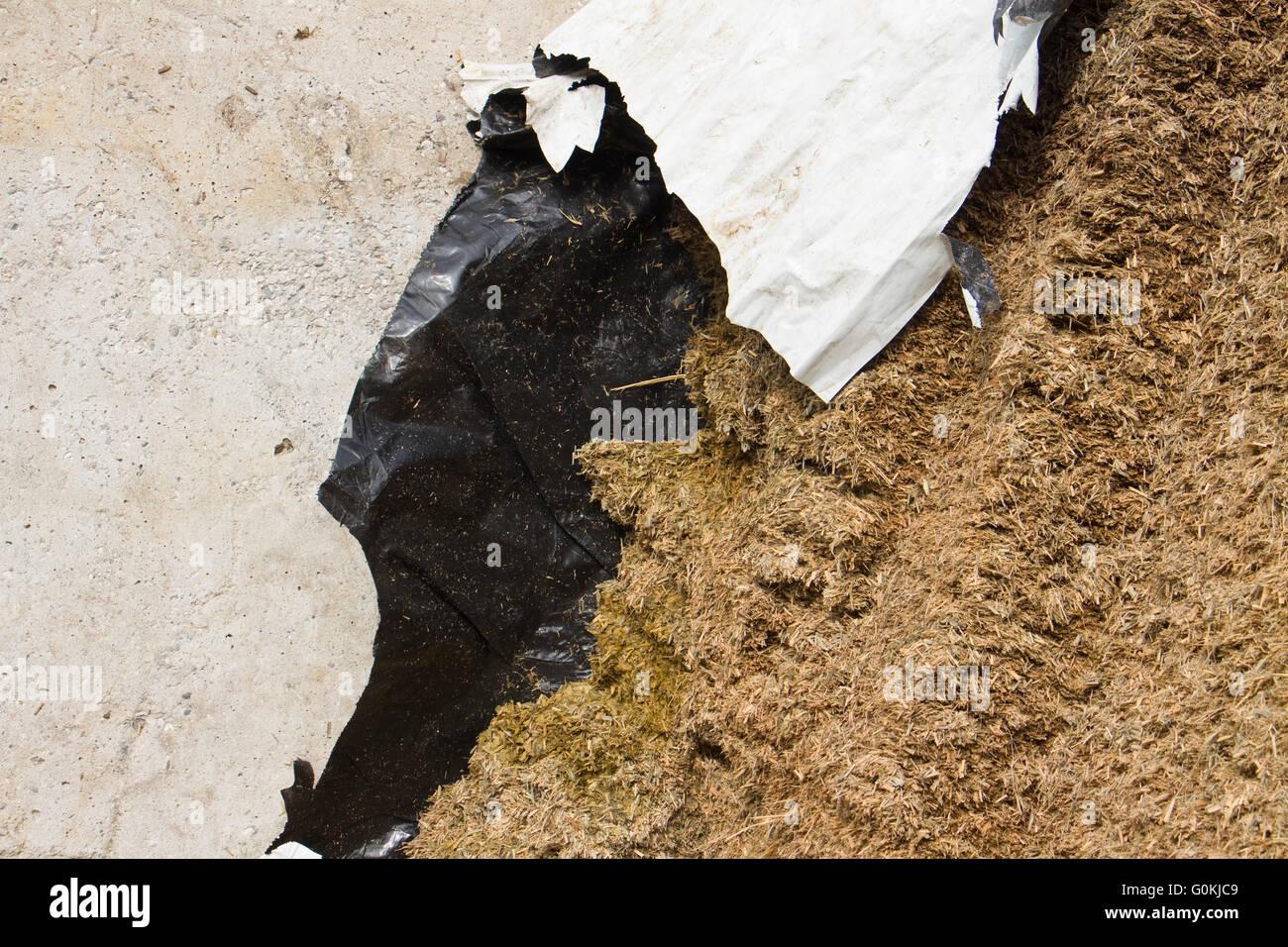 La paroi latérale en plastique assure un bon joint d'aérobie à un ensilage de luzerne le collier Photo Stock