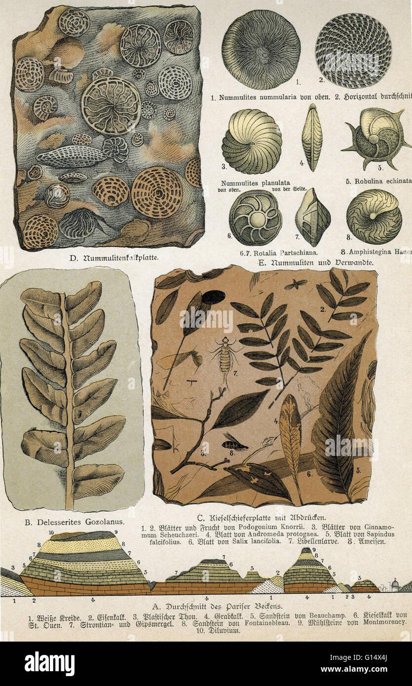 L'oeuvre historique de divers fossiles. Photo Stock