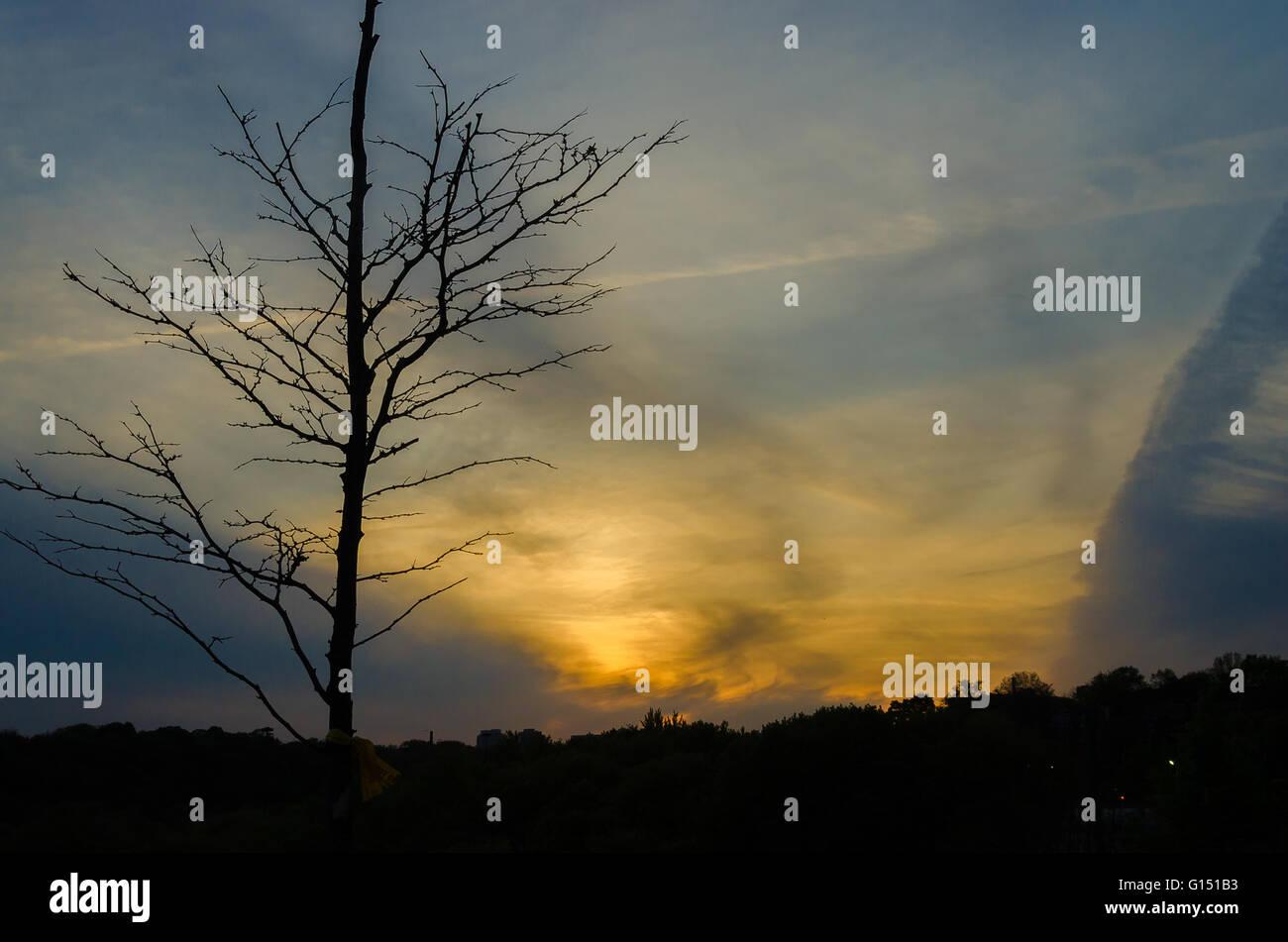 L'horizon de Toronto, Canada, avec le coucher du soleil au printemps de Riverdale Park East Banque D'Images